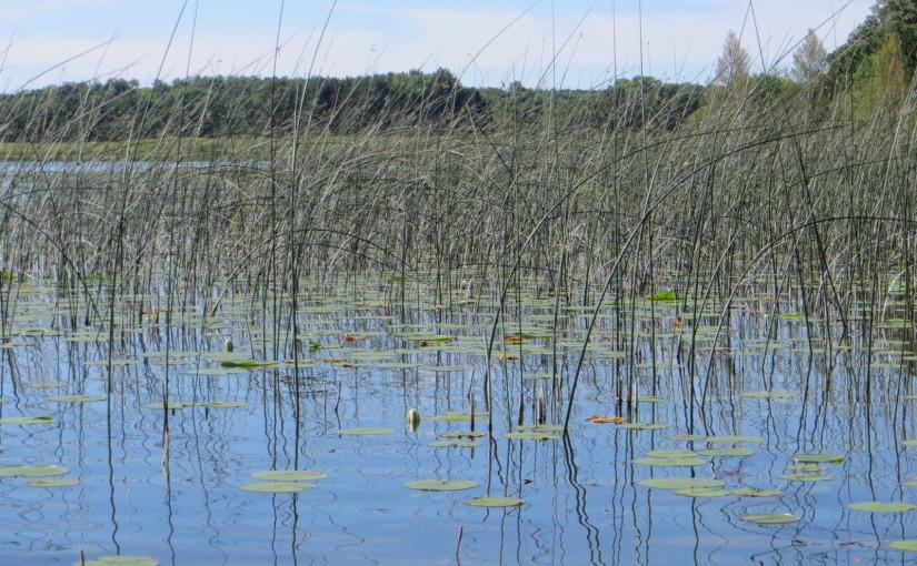 Ennis Lake 2015
