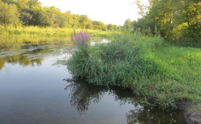 Turtle Creek (first time!)