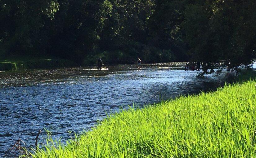 Turtle Creek (Pandemic reconnaissance)